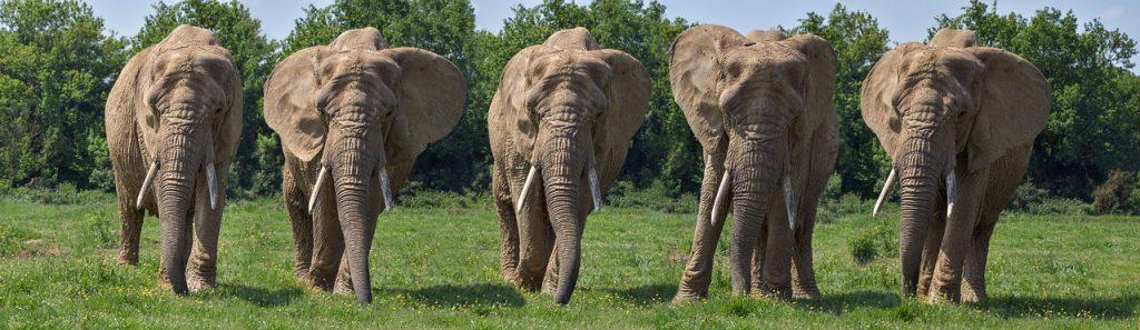 Пять слонов